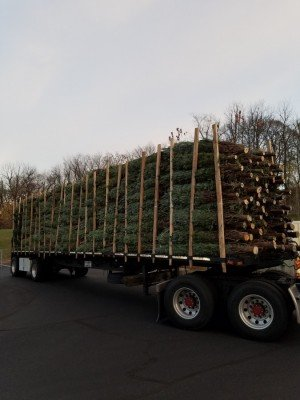 Trees Have Arrived
